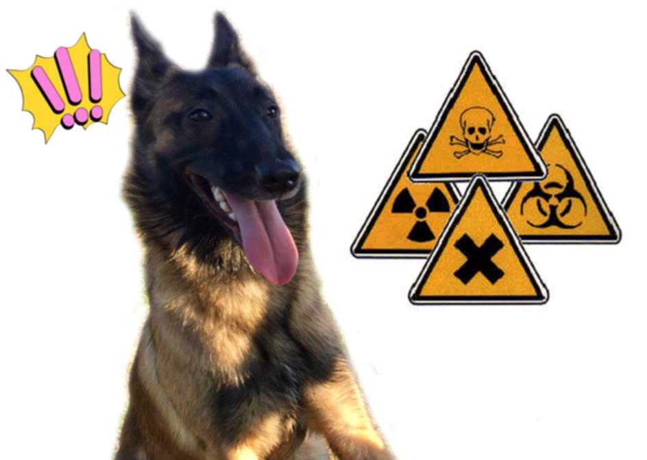 Règles de prévention pour la protection animale